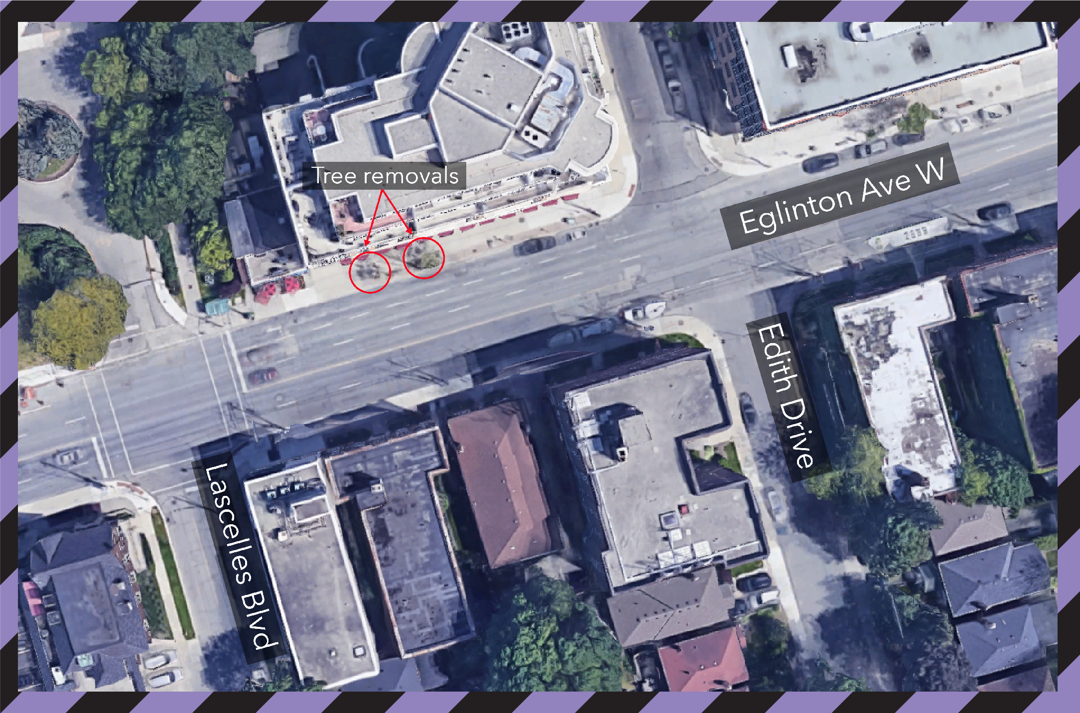 Tree Removals on Eglinton Avenue West between Edith Drive and Lascelles Boulevard September 16, 2020